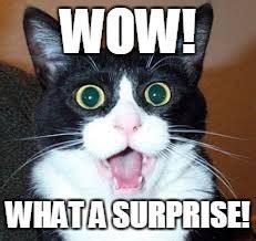 Meme Surprise - surprised cat meme images reverse search