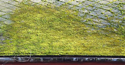 Facts About Moss On Roofs And Structures Red Roof Inn In Tucson How To Build A Over Trailer Shingles Brands B And J Roofing Corrugated Metal Lowes Mounted Whole House Fan Milwaukee Calculate Area