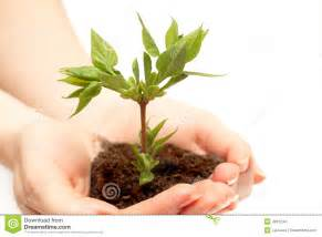 holding a small tree stock images image 4961234