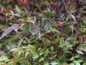 Arbustes Décoratifs à Fleurs : haie basse de 10 arbustes feuillage persistant ~ Premium-room.com Idées de Décoration