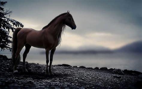 Arabian Horse Wallpaper (55+ Images