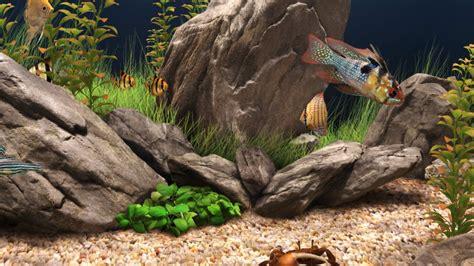 aquarium backgrounds wallpapers images pictures