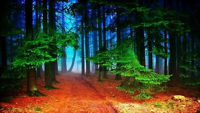 Nature Forest 2048 1152 Wallpapers Autumn Path