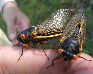 The Cicada Mania Blog: News, Findings, and Discoveries ...