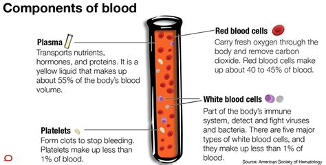 what color is blood inside the system blood components