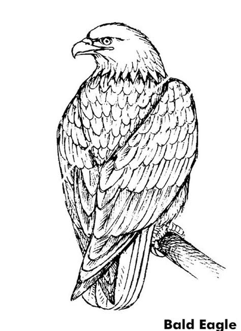 bald eagle coloring pages   print