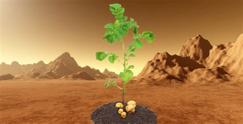 growing ideas  potatoes  mars