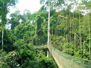 Kakum Canopy Walk, Ghana | Kakum National Park is a 375 ...