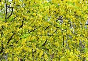 Baum Mit Blüten : bl te fr hling baum mit gelben bl ten stockfoto colourbox ~ Frokenaadalensverden.com Haus und Dekorationen