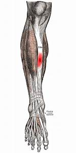 Running Writings  Injury Series  Tibial Stress Fractures