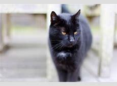 Schwarze Katzen Bilder » Bilddatenbank » Stockfotos