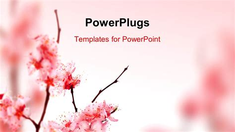 powerpoint template beautiful spring blossom  pink