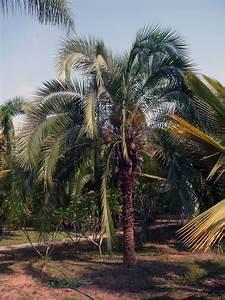 Jungle Jacks Thailand | Palms