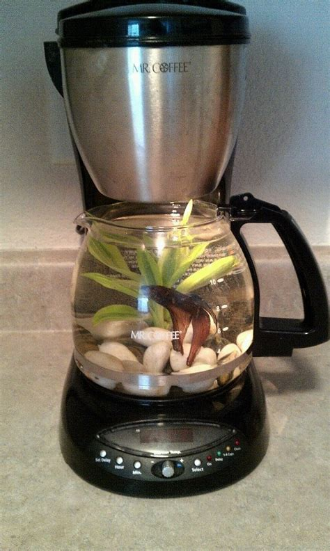 17 Best Images About Aquariums On Pinterest  Coffee Maker