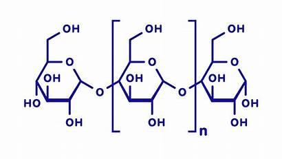 Polysaccharide Definition Monosaccharide Slidesharetrick Sucrose Functions