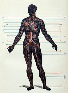Labeled Skeletal System Diagram