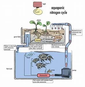 Aquaponics Diy Plans   Aquaponics  U2013 How To Build An