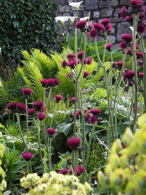 My Favorite Plant Combinations 49 (my Favorite Plant