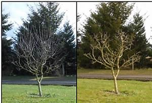 Time To Prune Fruit Trees  U2014 Fyi 98642