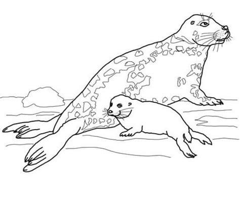 gray seal mother  baby coloring page  printable