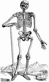Skeleton Pages Coloring Printable Skeletons Halloween Human Bones Colouring Sheets Drawings Anatomy Funny Skull Draw Medical Dani Jabo Vesalius Printables sketch template
