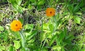 Welche Blumen Kann Man Essen : was mache ich mit der kr uterernte aus dem eigenen garten ~ Watch28wear.com Haus und Dekorationen