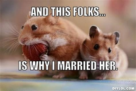30 Most Funny Hamster Meme Pictures And Photos