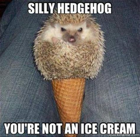 Hedgehog Meme - 500 best images about zzz funny inappropriate 3 on pinterest