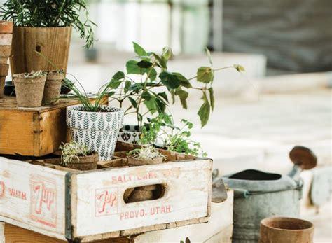 herbs windowsill beginners living delicious kitchen