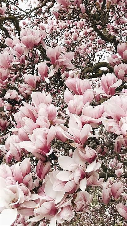 Magnolia Bee Lately Aesthetic Bloglovin