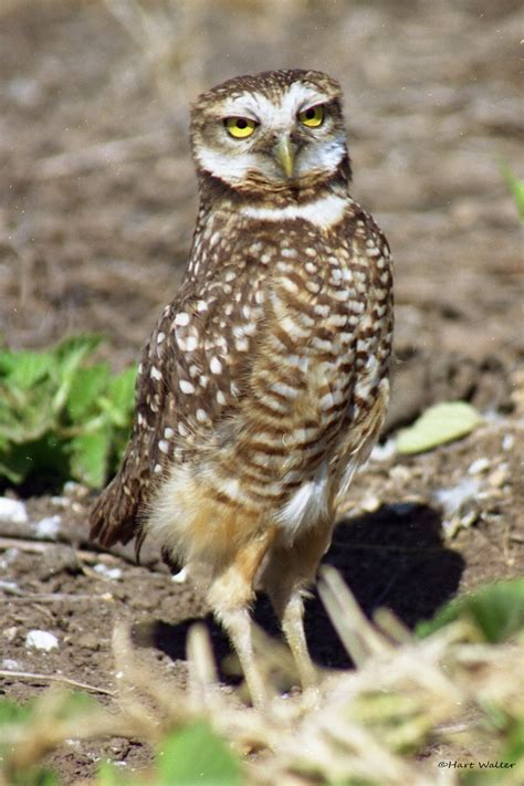 17 Best Images About Owlsawesome And Mysterious On