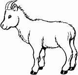 Goat Coloring Pages sketch template