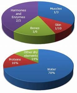 Percentage Of Water In Human Body Chart Pie Charts Pie Chart 11 Data Interpretation Questions