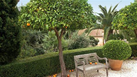 planter un oranger en pot les jardins protecteurs de alexandre risser