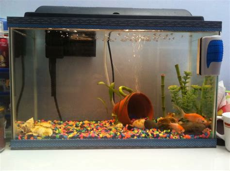 fish tank decorations cheap 25 best ideas about cheap fish tanks on tank