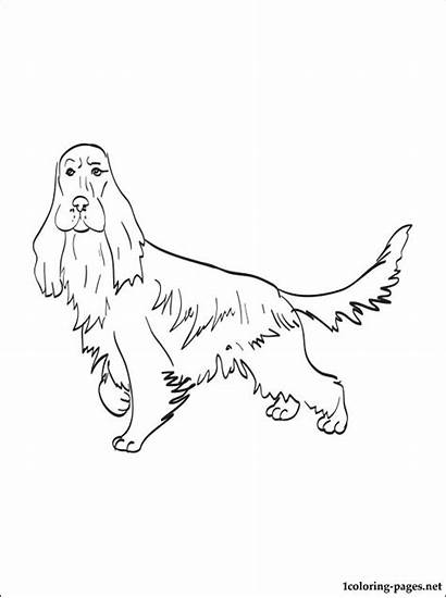 Cocker Spaniel Coloring Pages English Printable Dog