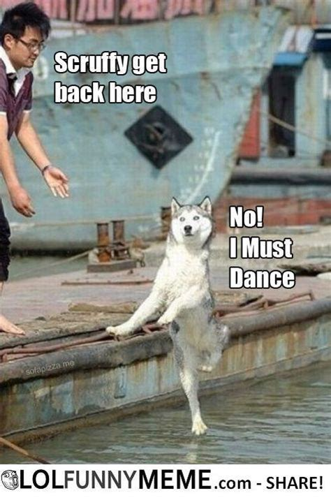 Funny Memes About Dancing - lol funny meme dog gallery 2