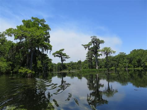 Wakulla Springs Boat Tour by 306 Best Images About Wakulla Springs State Park On
