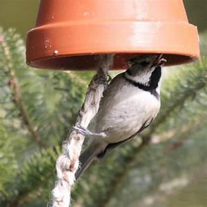 Futterglocke Selber Machen : vogelfutter herstellen fettfutter v gel im winter f ttern ~ Frokenaadalensverden.com Haus und Dekorationen
