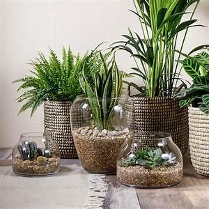 House, Plants