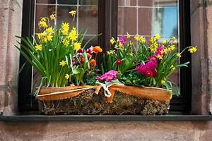 Blumenkübel Bepflanzen Sommer : balkonkasten im fr hling diese pflanzen kommen jetzt zum einsatz ~ Eleganceandgraceweddings.com Haus und Dekorationen