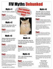what is fiv in cats 5 fiv myths debunked learn more here http fivcatrescue