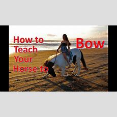 How To Teach Your Horse To Bow [no Ropes] Youtube