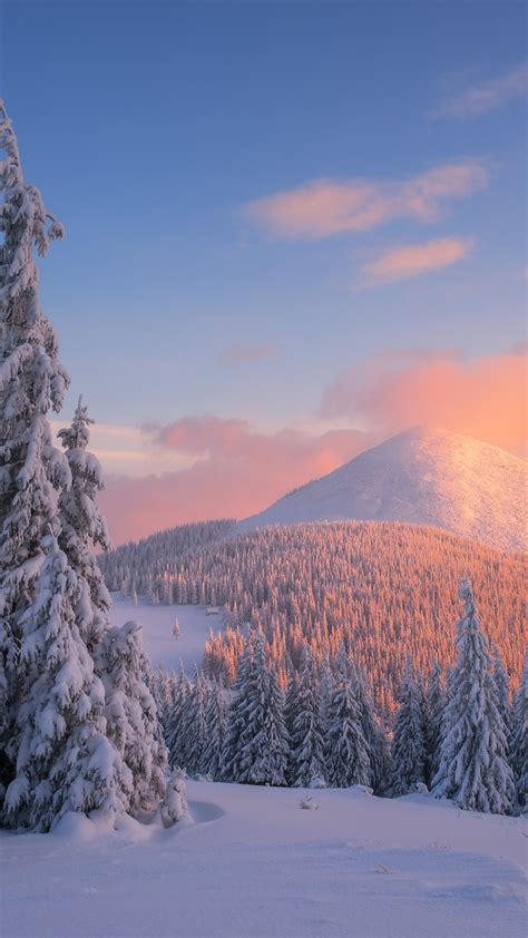 wallpaper carpathian mountains snow winter sunset pine