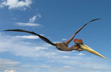 Dinosauro Volante Dinosaure Volant 224 D 233 Couvrir Dans Cet Article D 233 Di 233 224 La