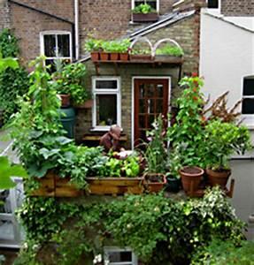 vertikales gemuse gemuse anbau auf dem grossstadt balkon With katzennetz balkon mit urban vertical garden