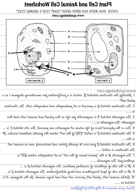 easy animal cells worksheet goodsnyc