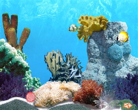 3d Animated Fish Wallpaper - tropic fish animated wallpaper
