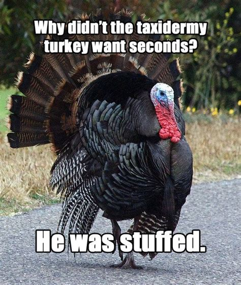 Turkey Meme - meet quot terrible thanksgiving pun turkey quot thanksgiving puns thanksgiving humor and humor