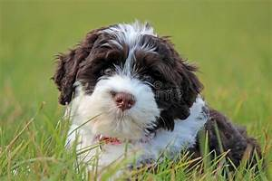 Brown and White Puppy stock photo. Image of grass, pink ...